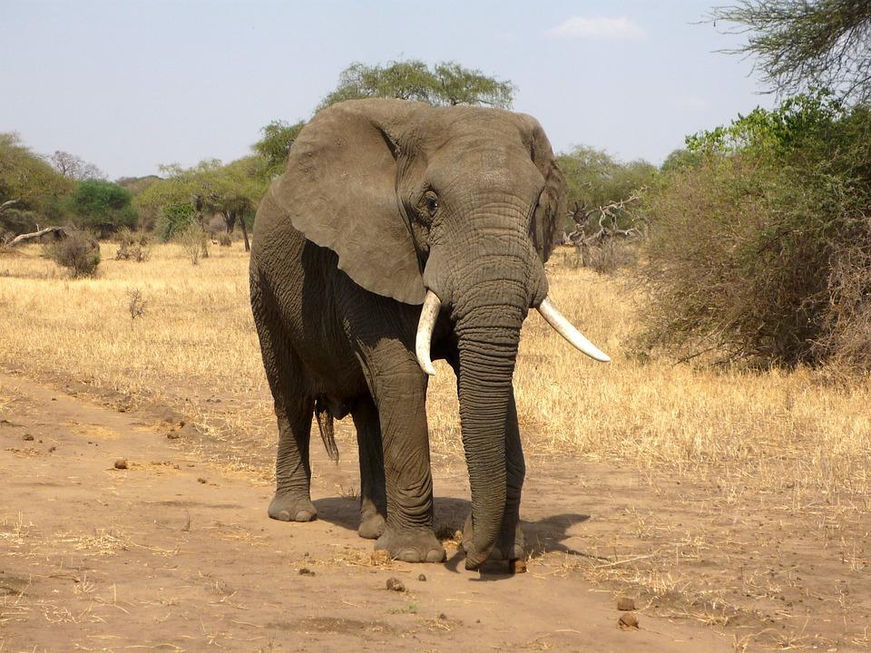 Vacances Safari